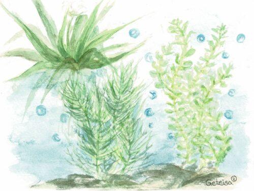 Sauerstoffpflanzen