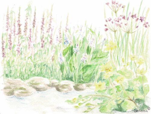 Blütepflanzen