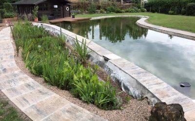Teichpflanzen für den Filtergraben